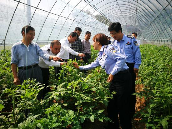 帮教团指导大棚蔬菜种植。