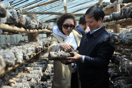 西安音乐学院党委书记张立杰、副院长安金玉查看流溪沟村香菇产业情况。