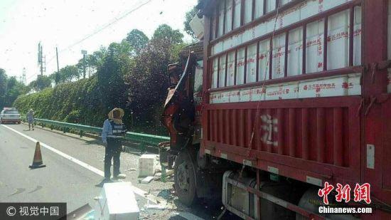 陕西货车相撞 200箱蜜蜂倾巢而出见人就蛰