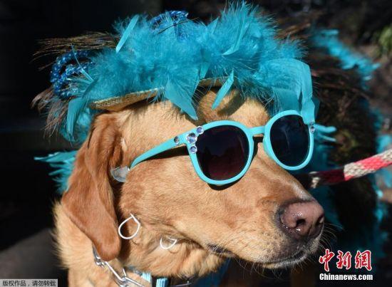 纽约举行万圣节狗狗变装大巡游 萌宠变装吸引眼球