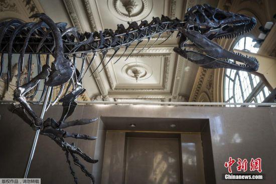 法国将拍卖1.5亿年前恐龙骨架 长9米宽2.5米物种不详