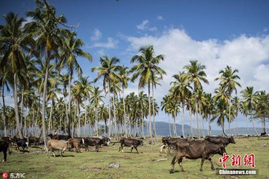 走进加勒比岛国——多米尼加共和国