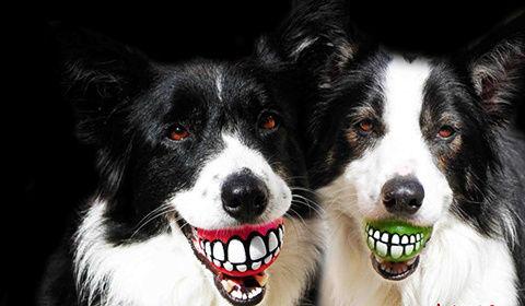 看一次笑一次 动物界的憨憨