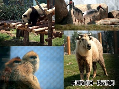 由陕西省珍稀野生动物抢救饲养研究中心