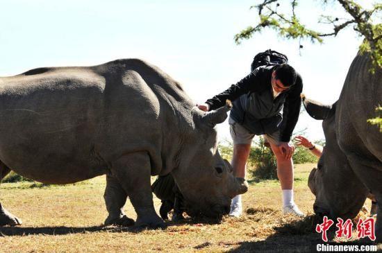 唤起公众对处境堪忧的非洲大象和犀牛的保护意识